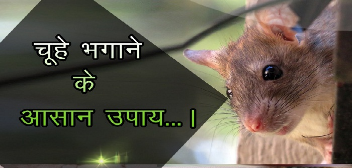 Home Remedies To Get Rid of Mouse