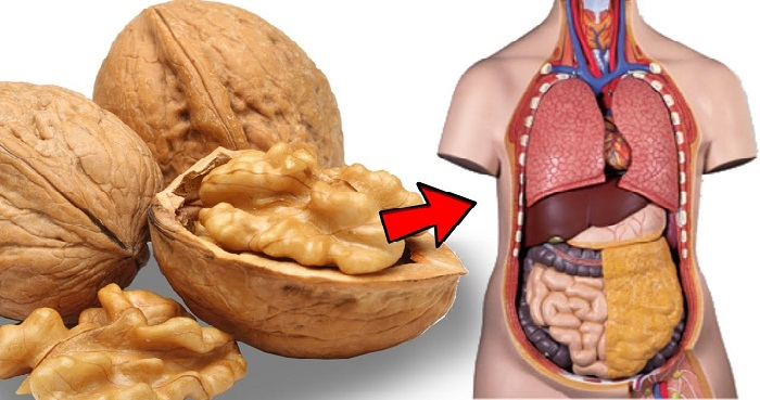 Walnut Is Beneficial For Heart