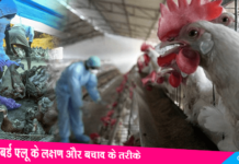 Symptoms & Prevention Of Bird Flu